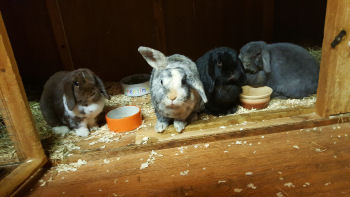 Alice, Charlie, Smudge and Bramble